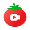 番茄视频直播